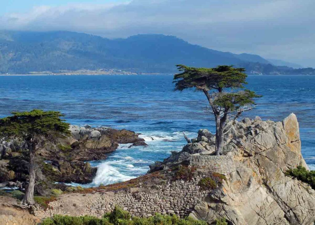 The Lone Cyprus along the 17-Mile Drive.