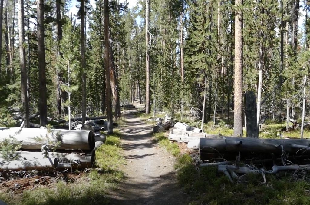 The Mallard Lake Trail in Yellowstone National Park.