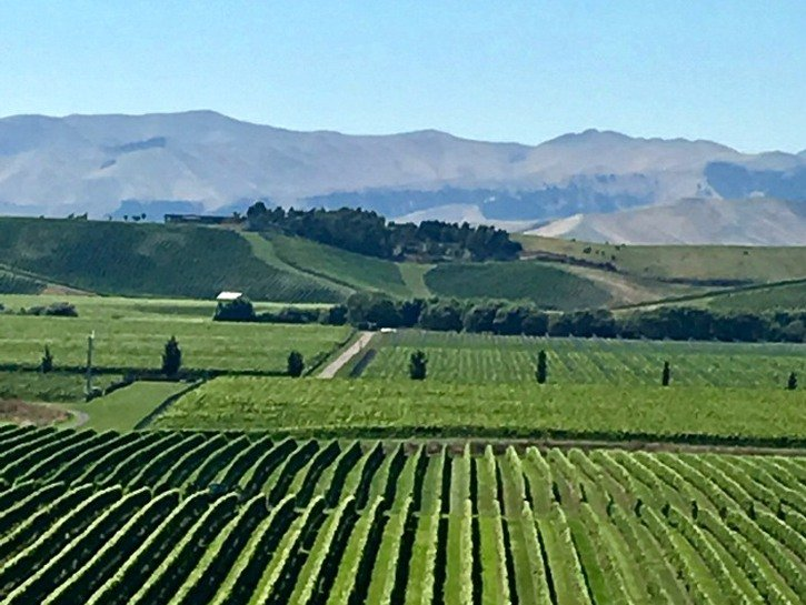 the Marlborough Region in New Zealand is a must-visit area