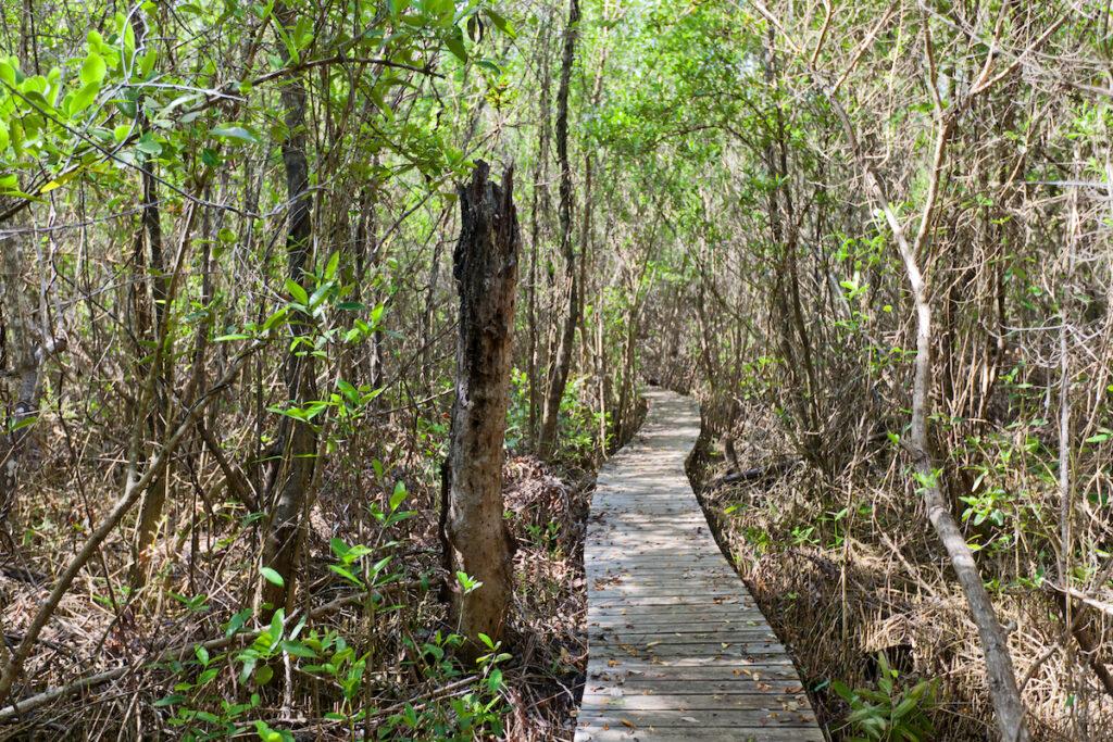 The Mastic Trail on Grand Cayman island.