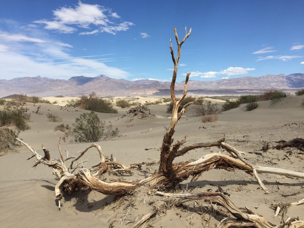 The Mesquite Flat Sand Dunes in Death Valley National Park.