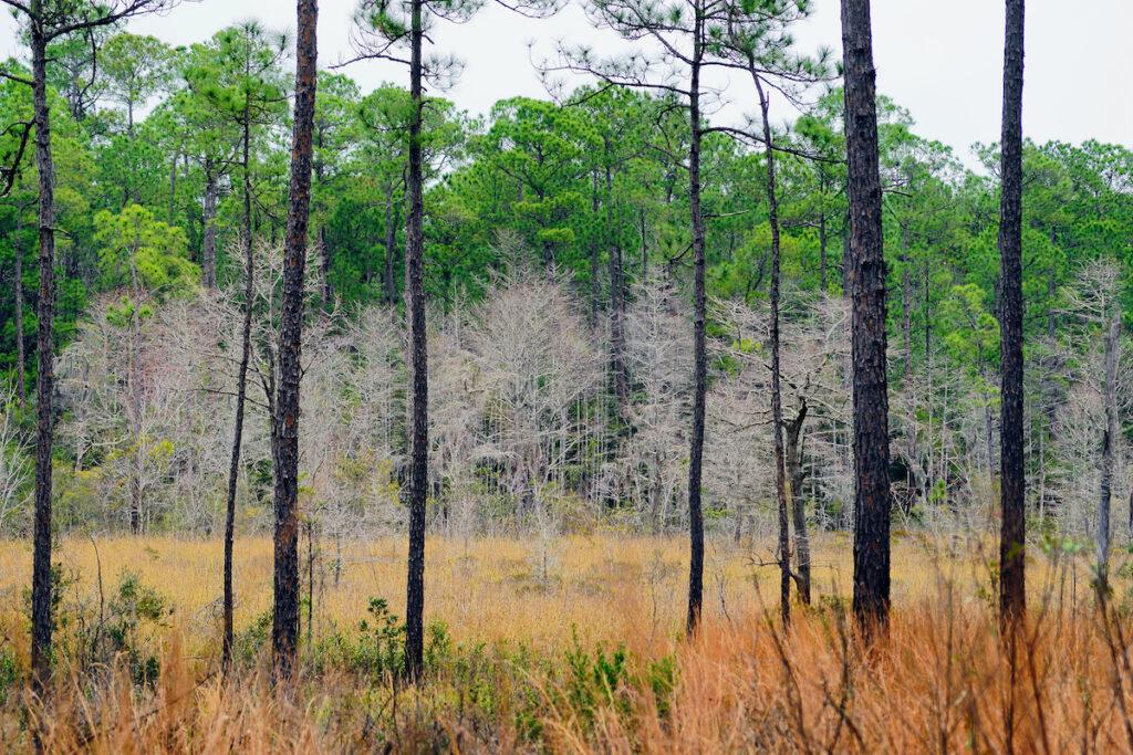 The Mississippi Sandhill Crane National Wildlife Refuge Center.