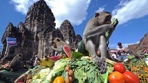 The Monkey Buffet Festival