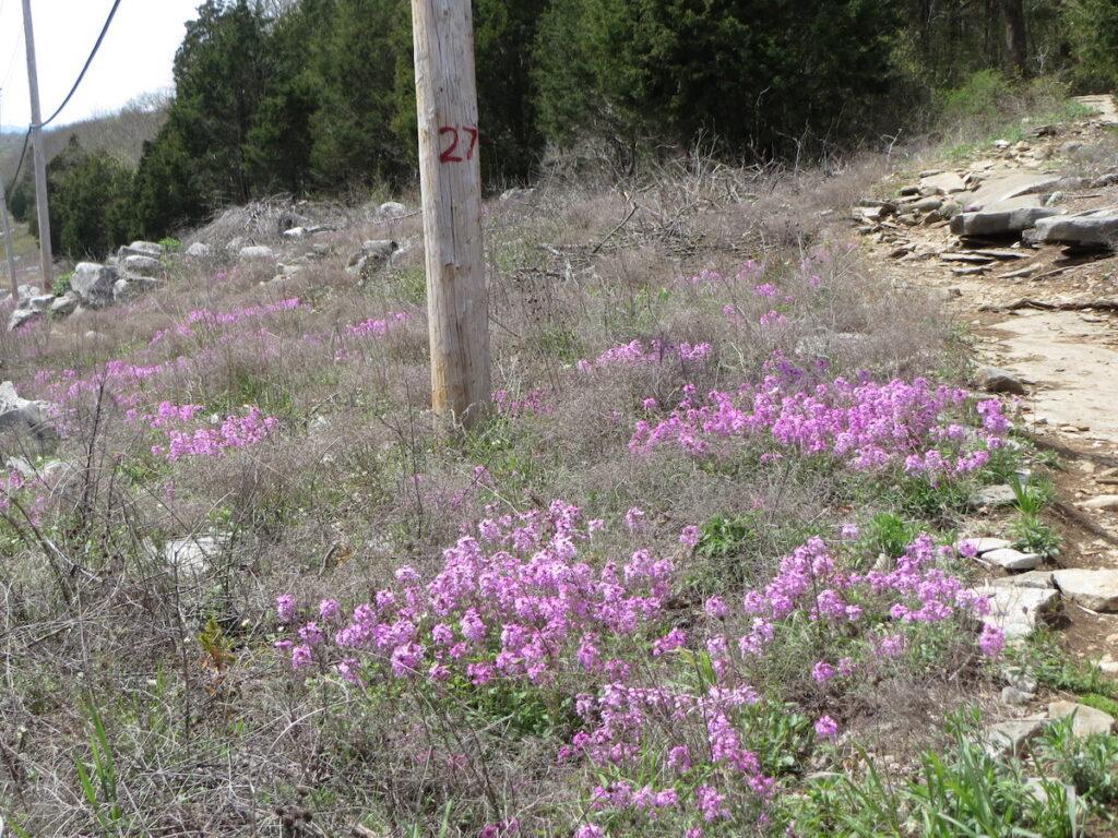 The Monte Sano Nature Preserve in Alabama.