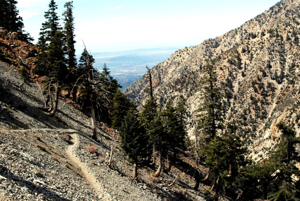 The Mount Baldy Loop trail.