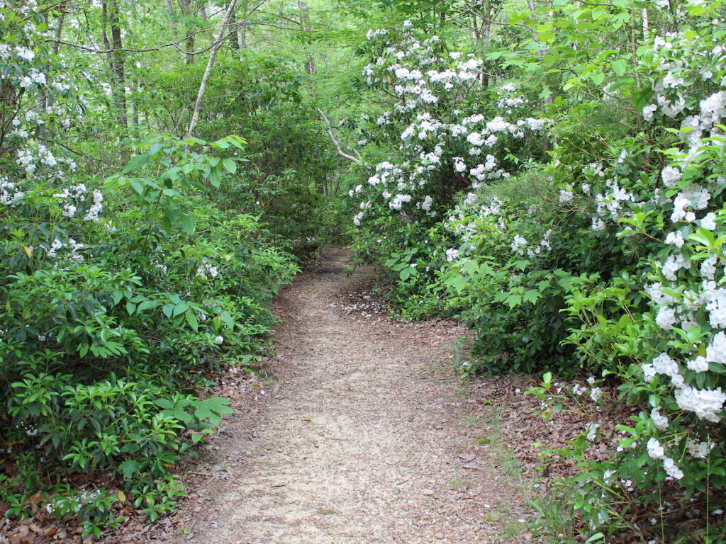 The Mountain Laurel Trail in Delta, Alabama.