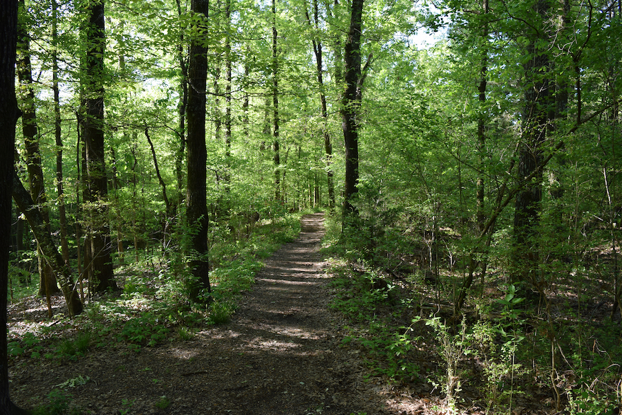 The Natchez Trace National Scenic Trail in Mississippi.