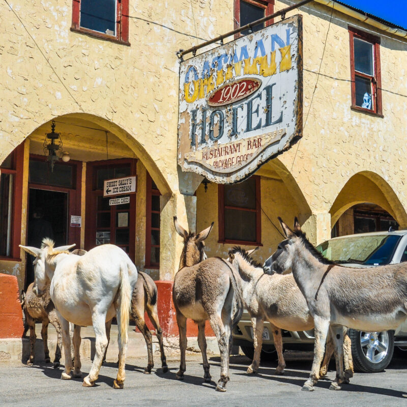The Oatman Hotel and burros in Arizona.