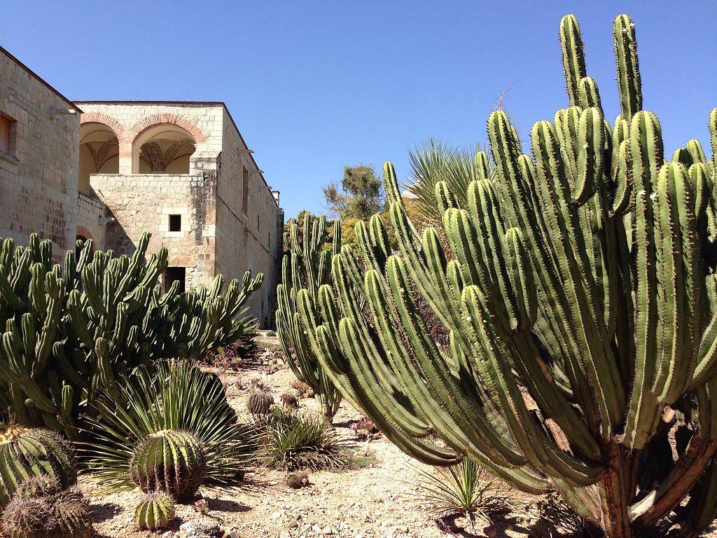 The Oaxaca Ethnobotanical Garden in Mexico.