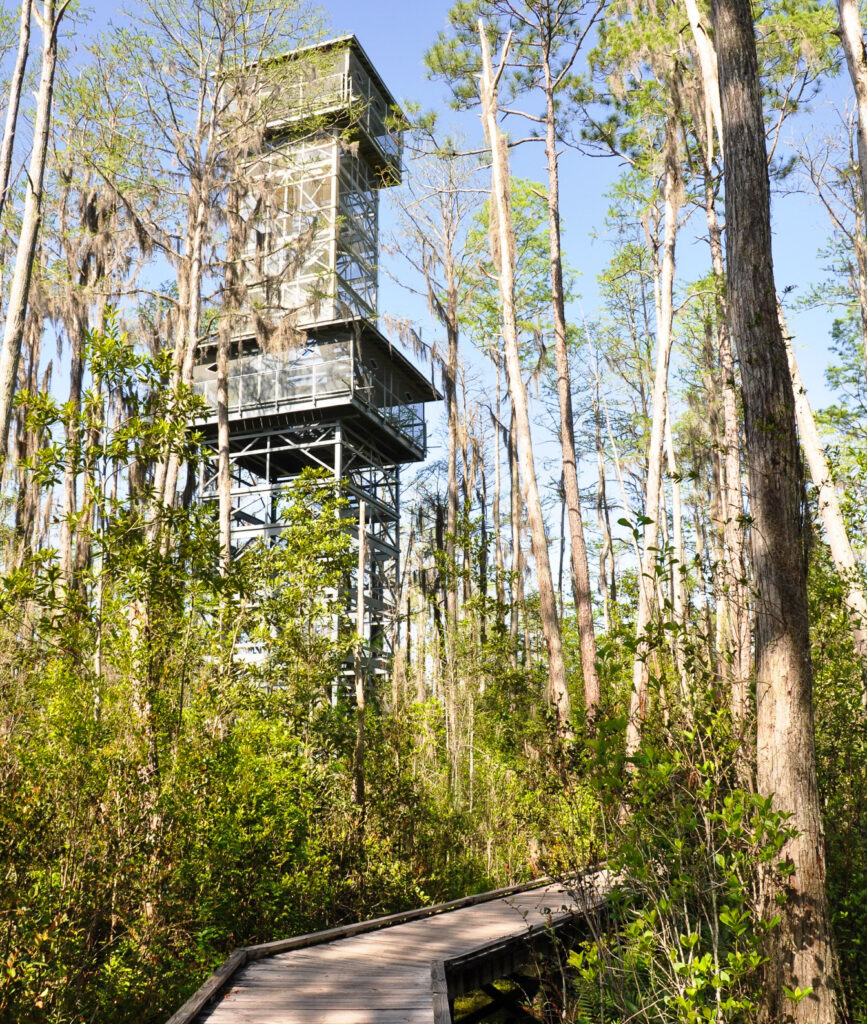The observation tower in Okenfenokee Swamp.