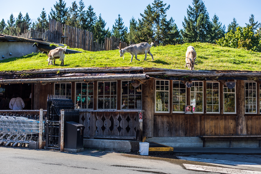 The Old Country Market in Coombs, Canada.