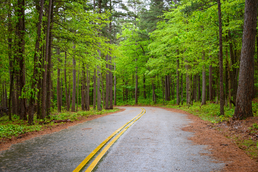 The Ouachita National Forest in Arkansas.