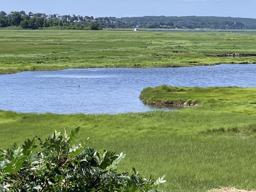 The Parker River National Wildlife Refuge on Plum Island.