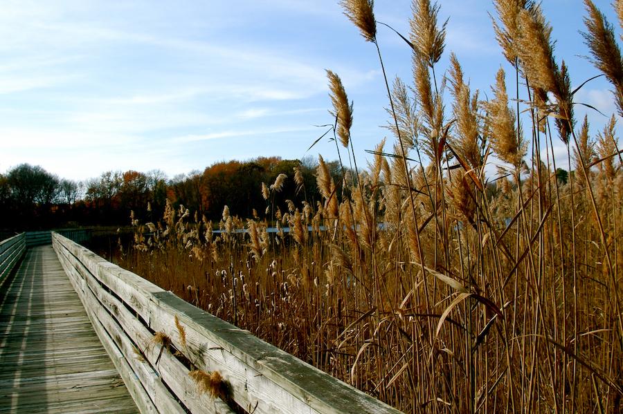 The Prime Hook National Wildlife Refuge in Delaware.