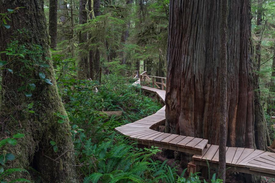 The Rainforest Hiking Trail through Pacific Rim National Park.
