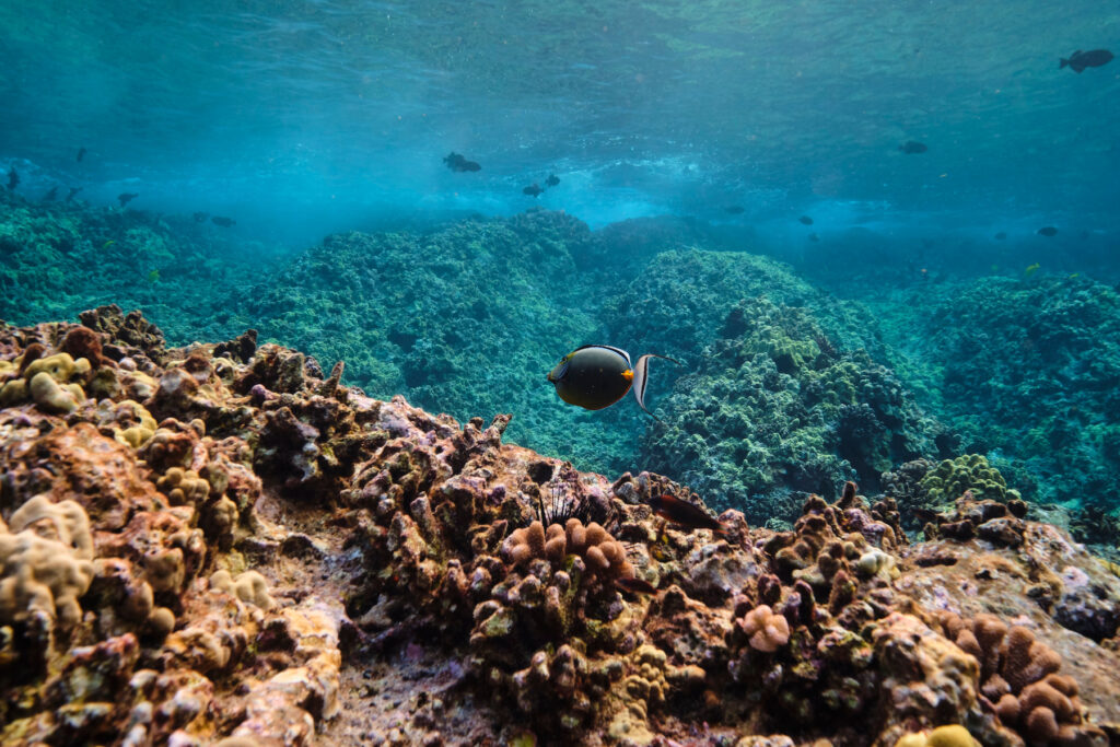 The reef at Molokini Crater in Hawaii.