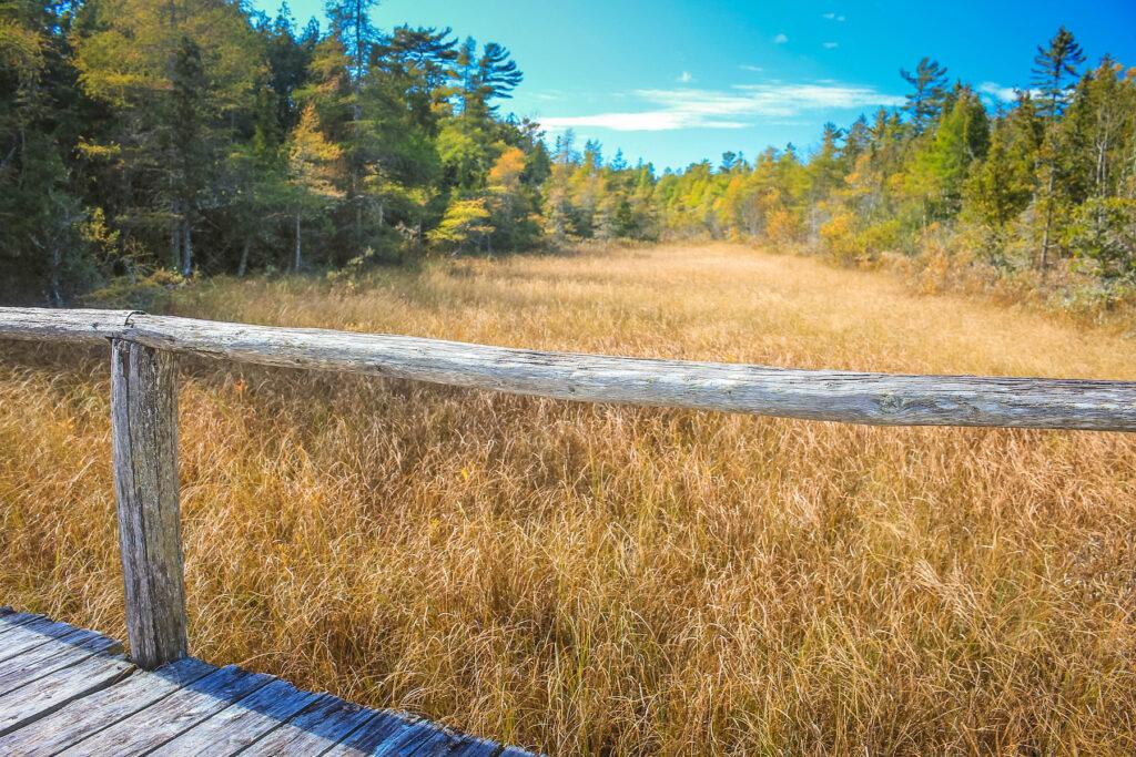 The Ridges Sanctuary near Baileys Harbor, Wisconsin.