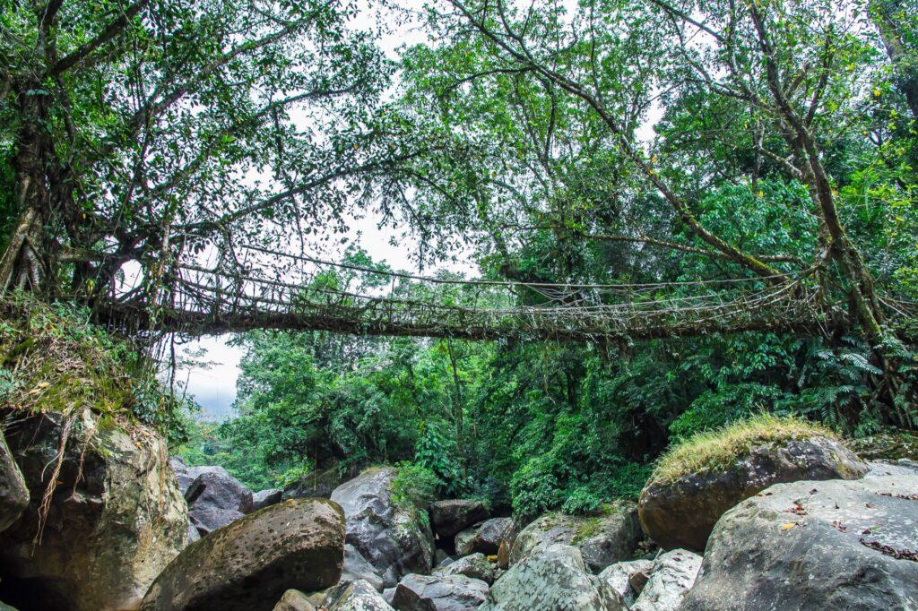 The Ritymmen Root Bridge in India.