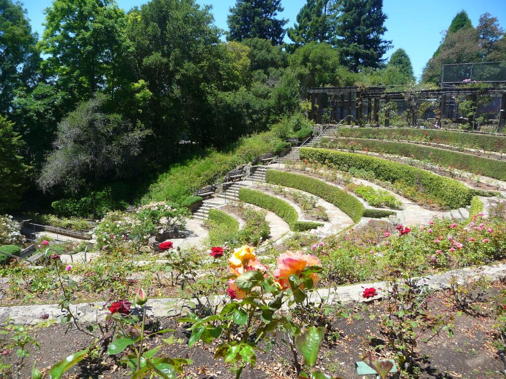 The Rose Garden in Berkeley, California.