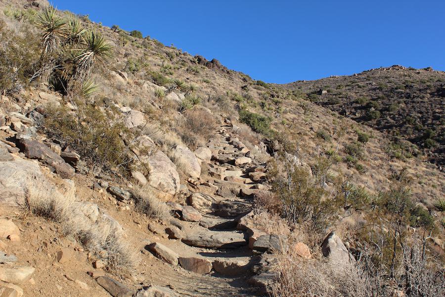 The Ryan Mountain Trail in Joshua Tree National Park.