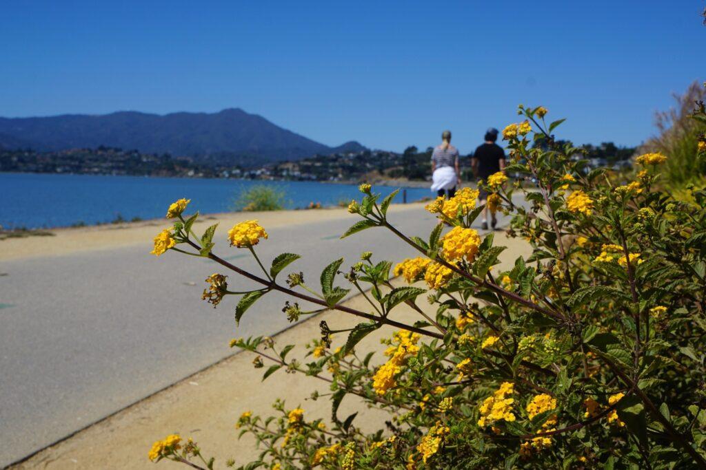 The San Francisco Bay Trail in California.