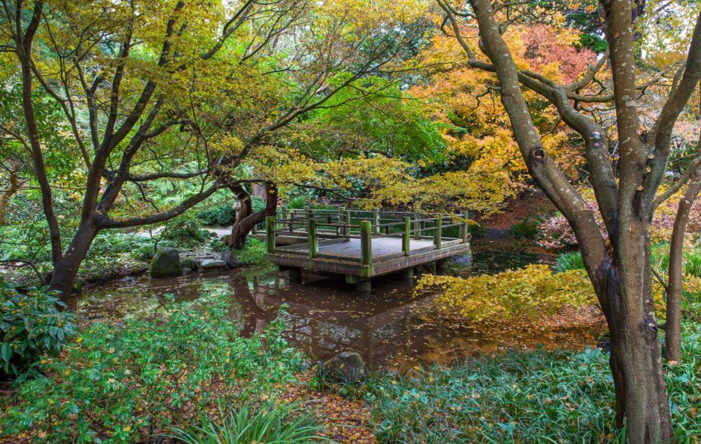 The San Francisco Botanical Garden.