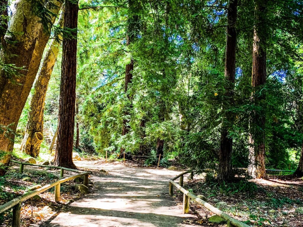 The Santa Barbara Botanic Garden in California.