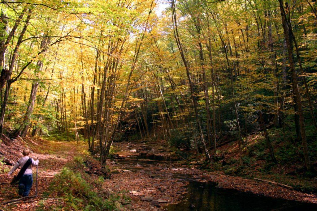 The Seneca Creek Trail during the fall.