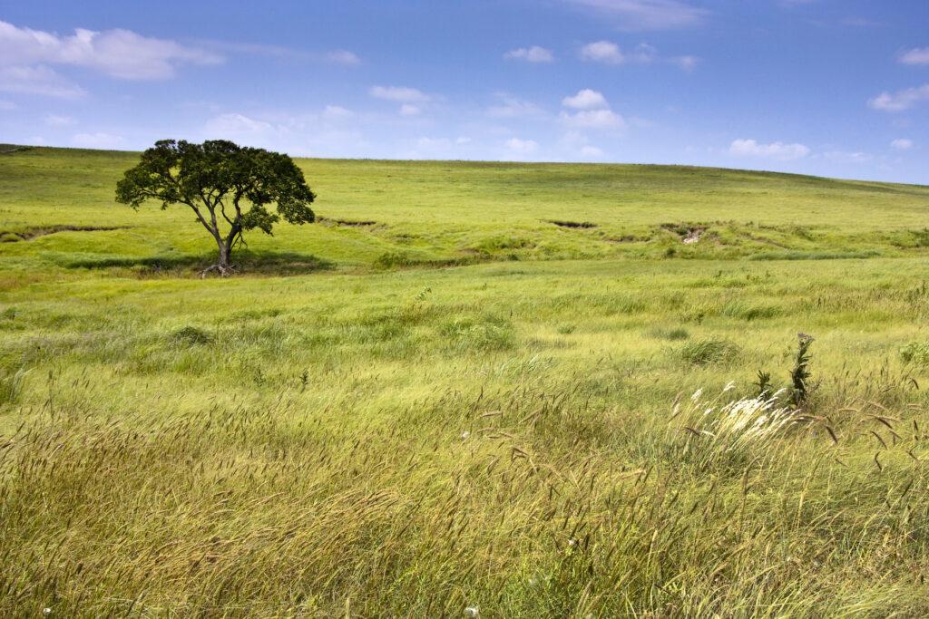 The Tallgrass Prairie Natural Preserve in Kansas.