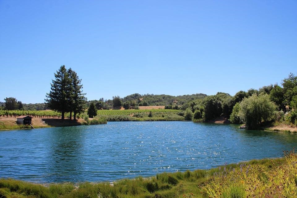The Testa Ranch and vineyards.