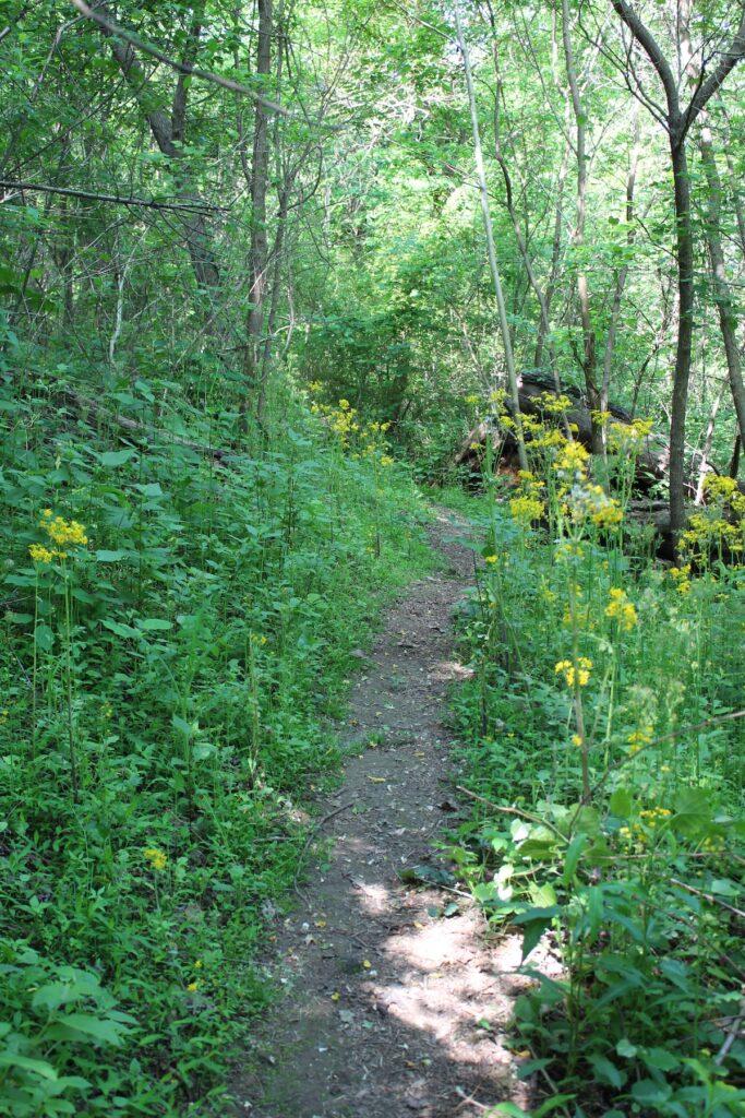 The Tom Bevill Trail in Albertville, Alabama.