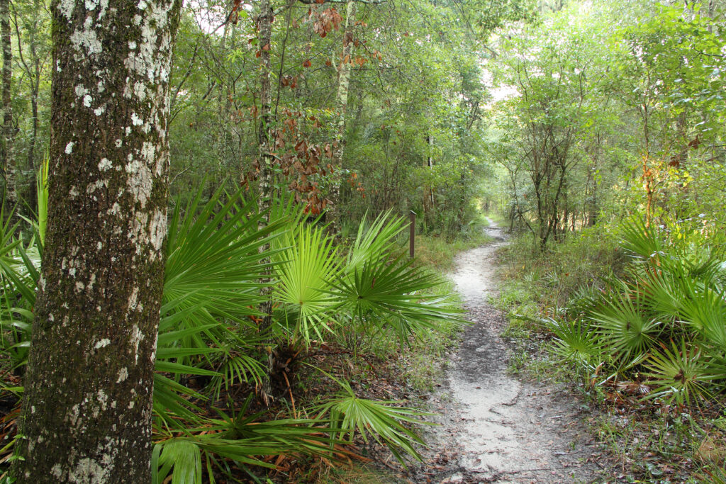 The trail from Bell Springs to Big Shoals in Florida.
