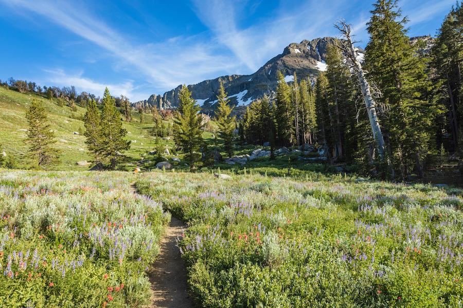 The trail through Carson Pass in California.