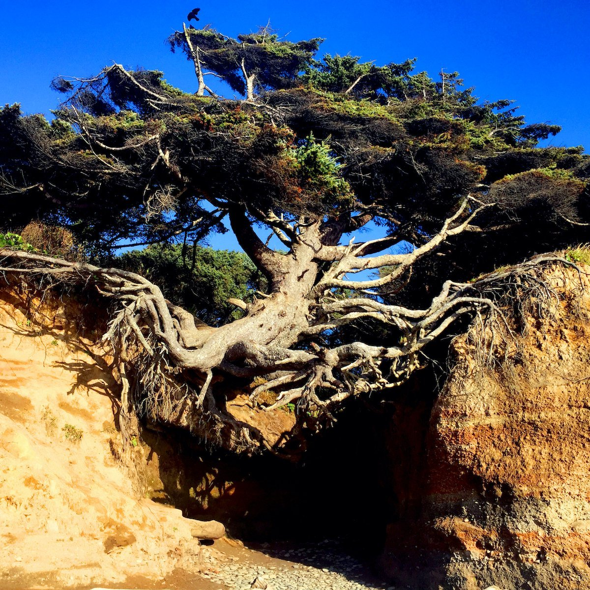 The Tree of Life.