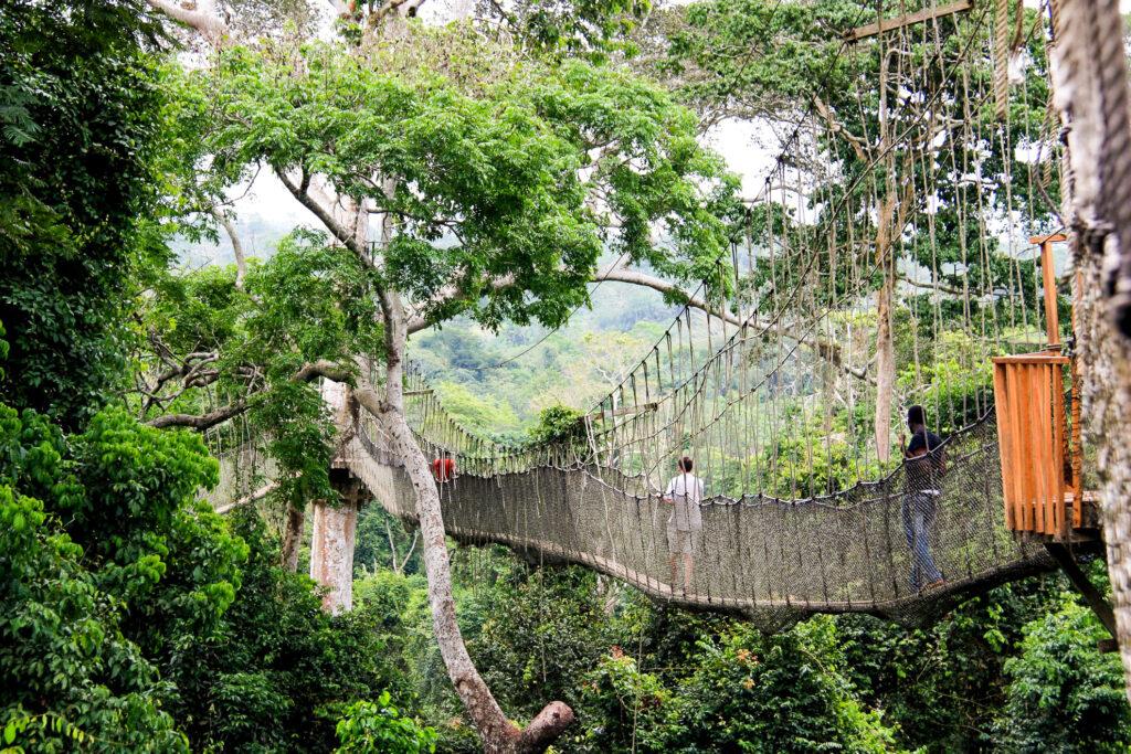 The treetop canopy walkway in Kakum National Park, Ghana.