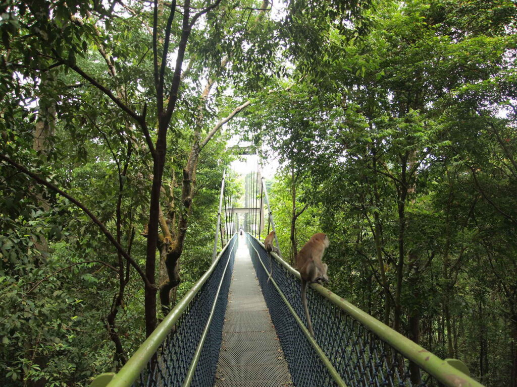 The treetop walk in MacRitchie Reservoir Park.