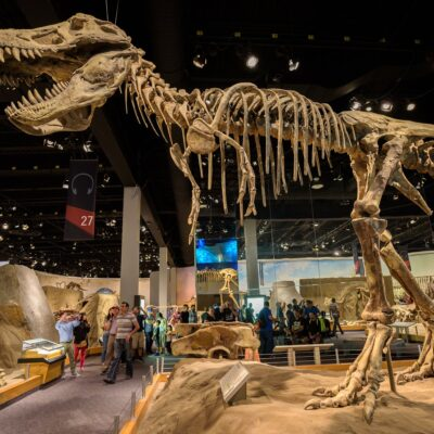 The Tyrannosaurus rex skeleton at The Royal Tyrrell Museum Of Palaeontology.