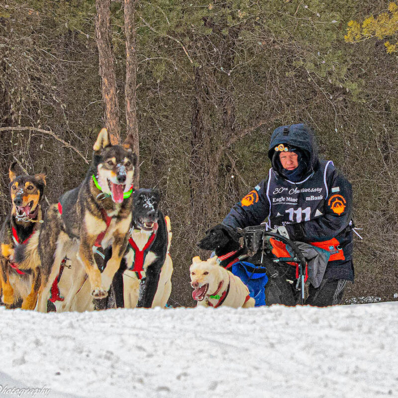 The UP200 dog sled race in Marquette, Michigan.