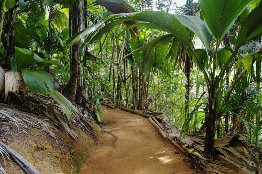 The Vallee de Mai on Praslin Island in the Seychelles.