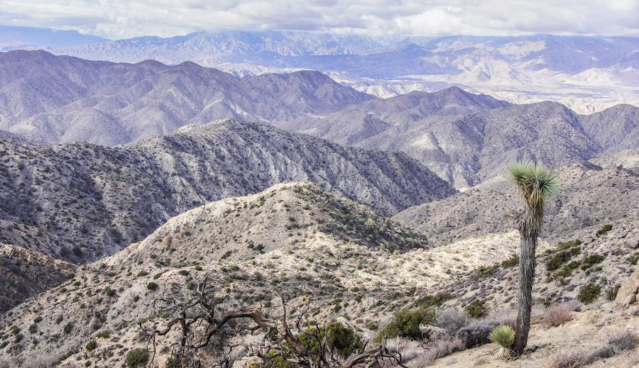 The Warren Peak Trail in Joshua Tree National Park.