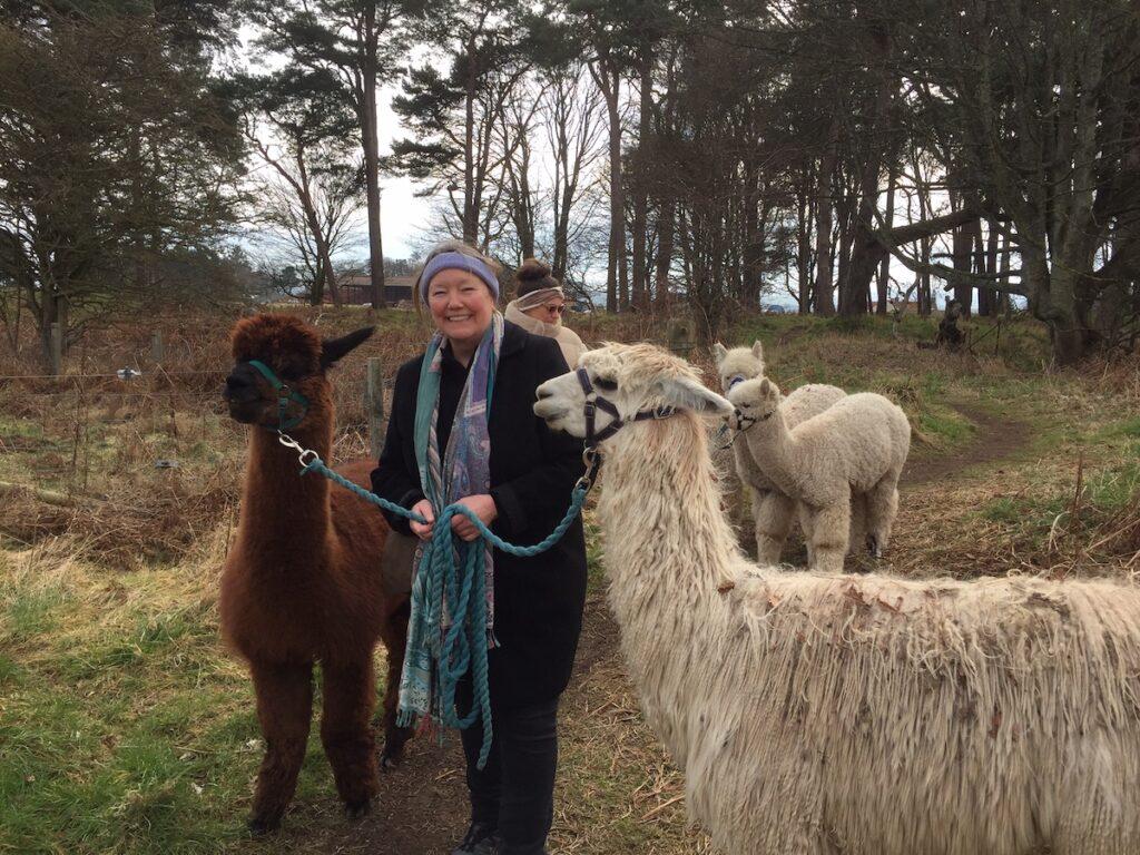The writer posing with alpacas.