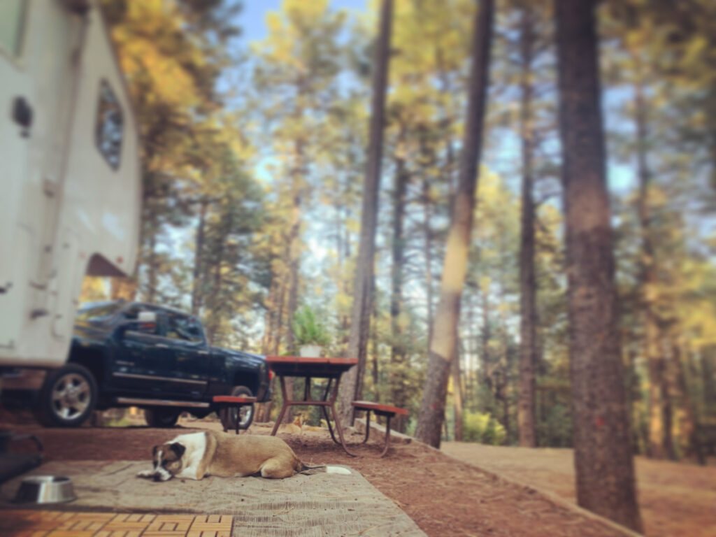 The writer's dog at a campsite.