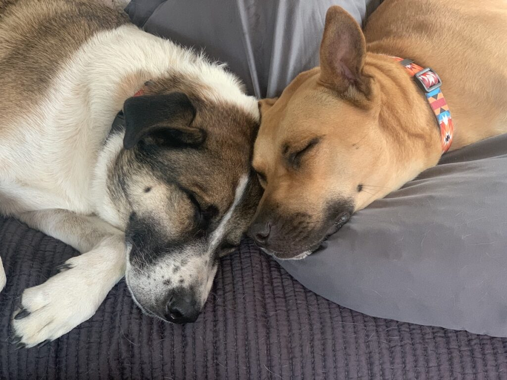 The writer's dogs taking a nap.