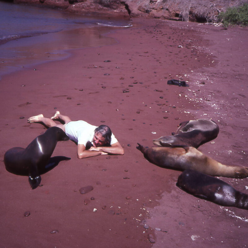 The writer's husband on a beach with seals in Galapagos.