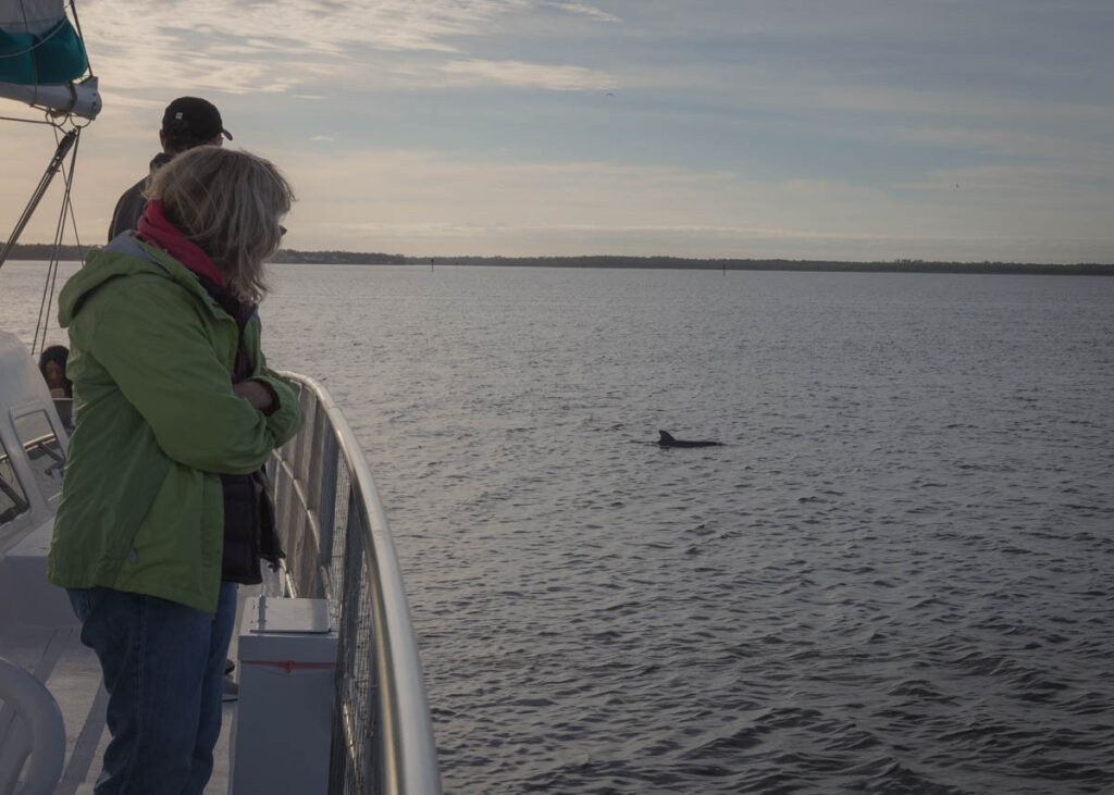 The writer watching bottlenose dolphins in Alabama.