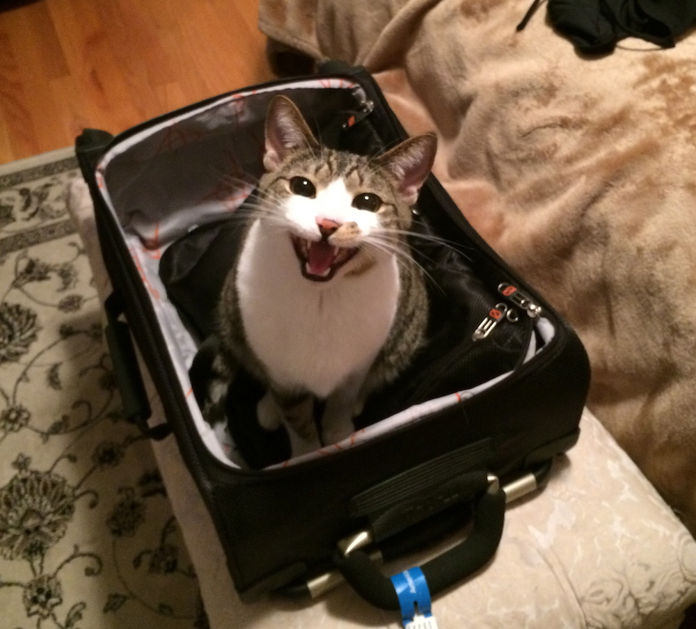 The writers' cat Jake helping them pack.