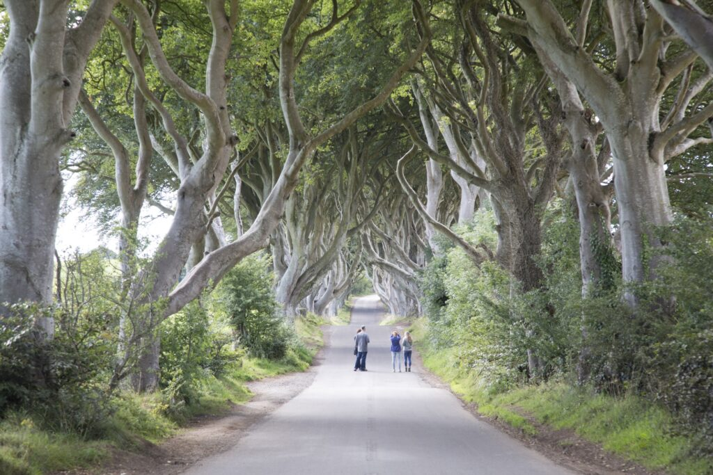 Tourists at the Dark Hedges.