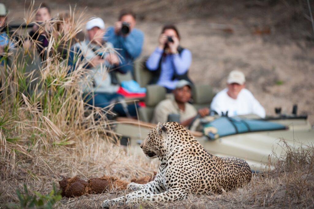 Tourists encounter a leopard on a safari.