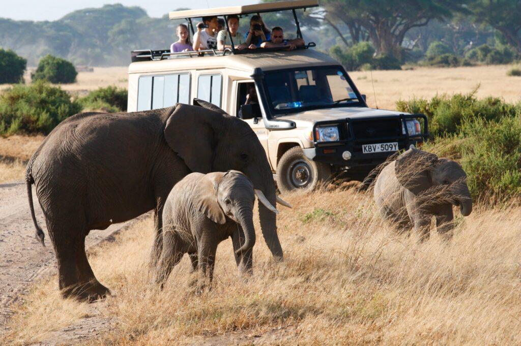Tourists encounter elephants on a safari.