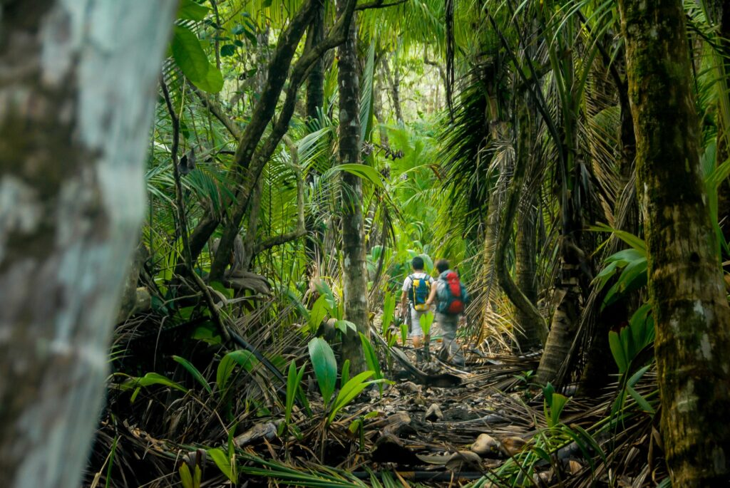 Tourists hiking through the jungles of Costa Rica.